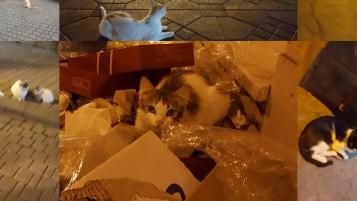 Cats of Marrakech