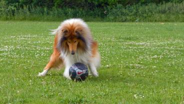 This Soccer Dog Is Such A Good Dog That He Saved A Goal