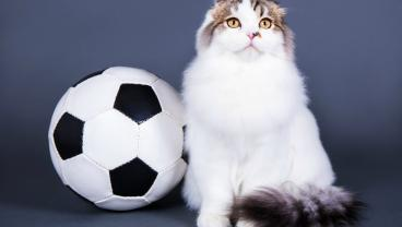 This Cat Is A Certified Shot-Stopper