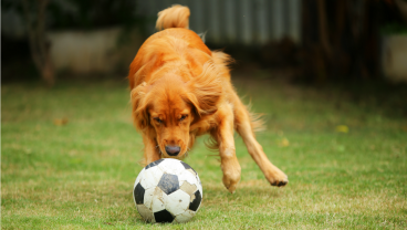 This Dog Is Premier League Manager Material