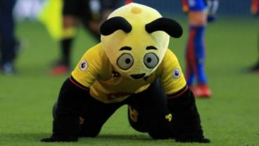 The Biggest Boxing Day Storyline Was Watford's Harry The Hornet