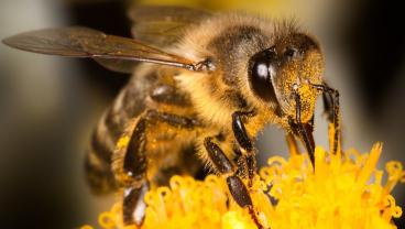 Scientists Taught Bees How To Play Soccer