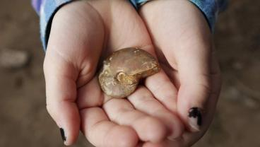 Girl Gets Bored To Death At Sister's Soccer Game, Unearths 65 Million-Year-Old Fossil