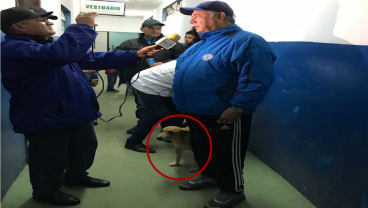 Doggo Becomes Assistant Pooch For Paraguayan Side After Receiving An Empanada