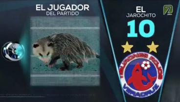 Liga MX Match Invaded By Possum So Cute It Was Named Player Of The Game