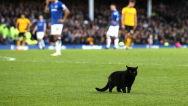 Everton's Best Player Today Was A Black Cat