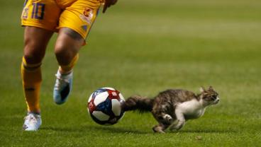 Little Feral Kitten ENDS André-Pierre Gignac's Career