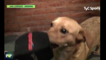 Good Dog Runs On Soccer Field, Gives Good Interview After