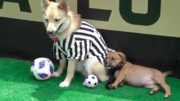 Enjoy The Puppy Bowl? Check Out Atlanta United's Spin-Off, World Pup