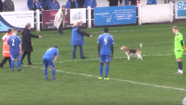 No One Could Catch This Pitch Invading Dog