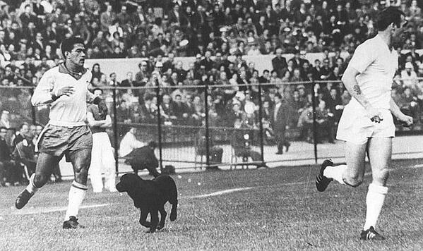 Image result for Dog World Cup 1962