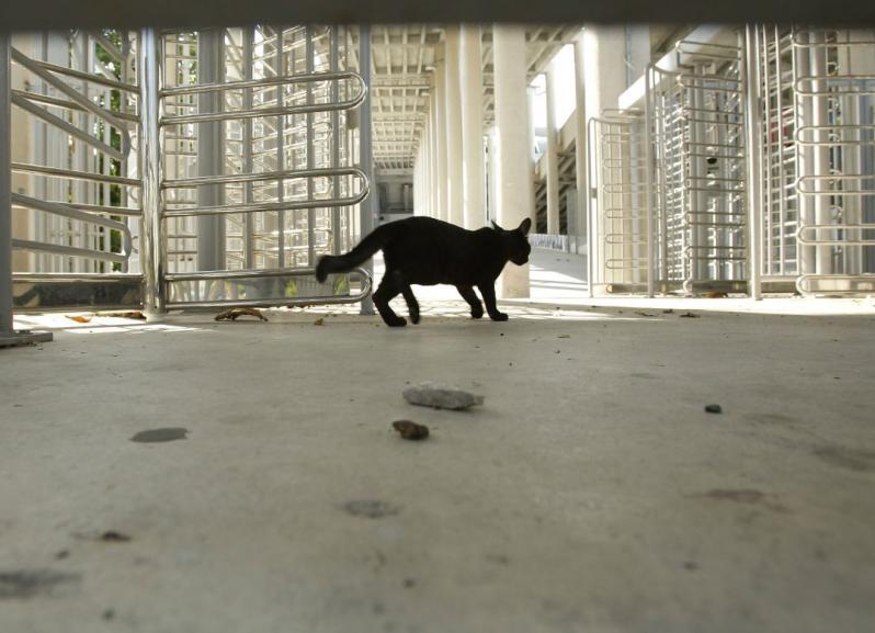 Gato-Maracana.jpg