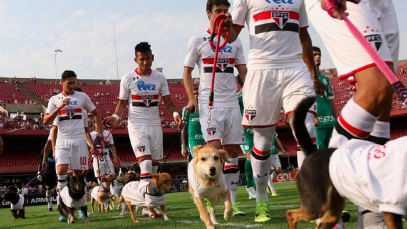 Why do soccer players walk out with kids? To raise awareness of stray dogs.